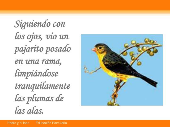 Siguiendo con los ojos, vio un pajarito posado en una rama, limpindose tranquilamente las plumas de las alas.