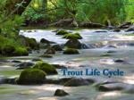 trout life cycle