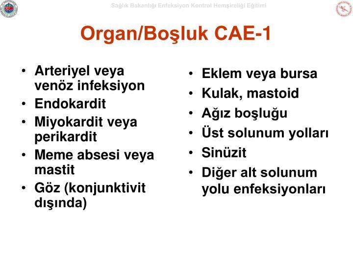 Organ/Boşluk CA