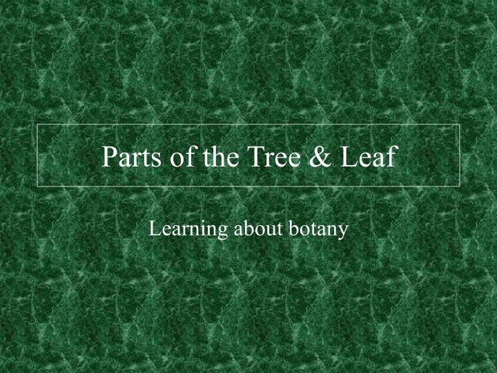 Parts of the tree leaf