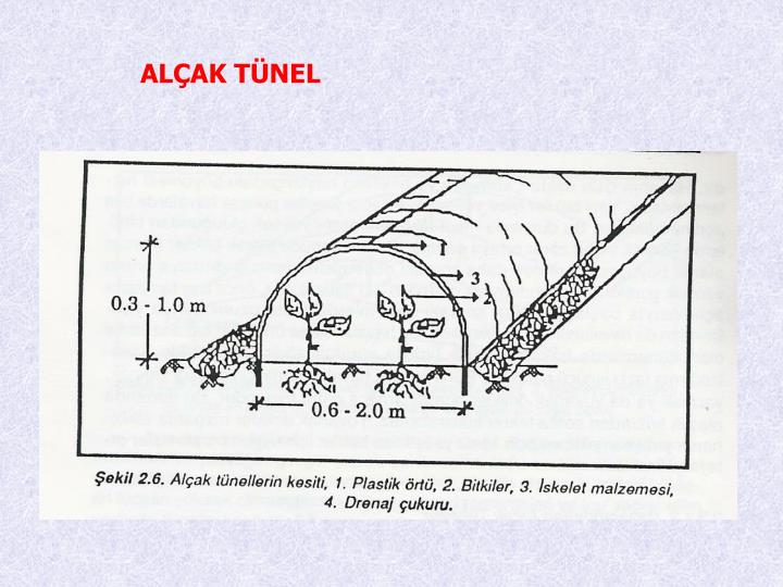 ALAK TNEL