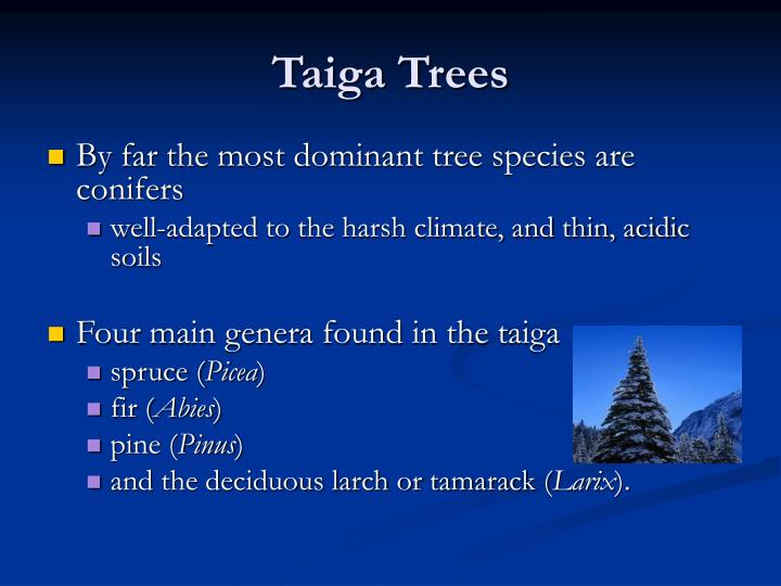PPT - TAIGA The Boreal Forest PowerPoint Presentation - ID:5533053