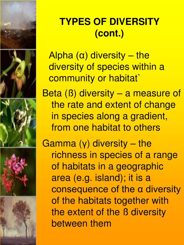 TYPES OF DIVERSITY (cont.)