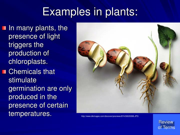 Examples in plants: