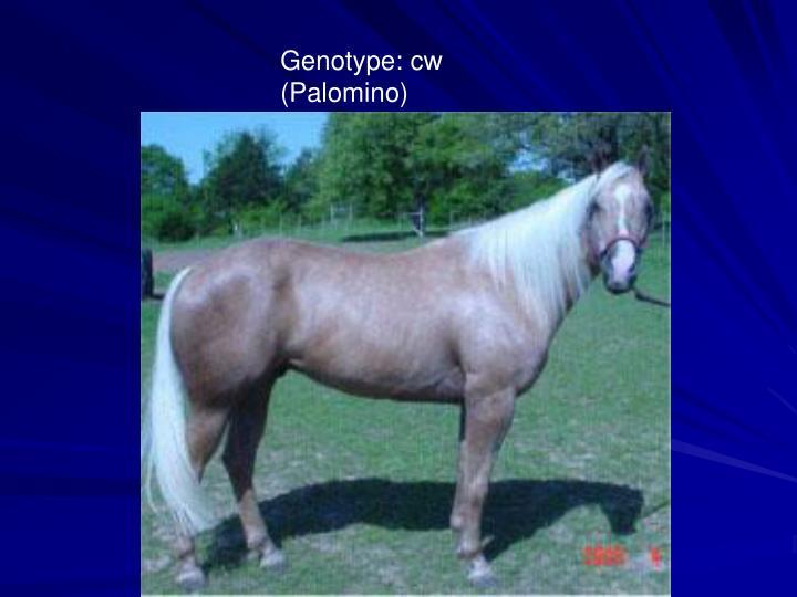 Genotype: cw  (Palomino)