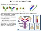 antibodies and derivatives