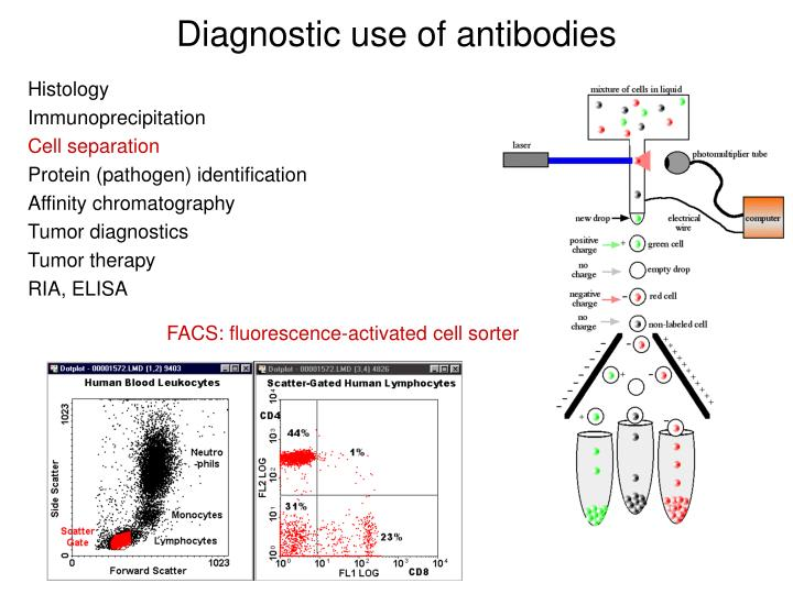 Diagnostic use of antibodies