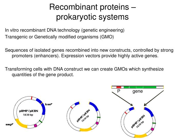 Recombinant proteins prokaryotic systems