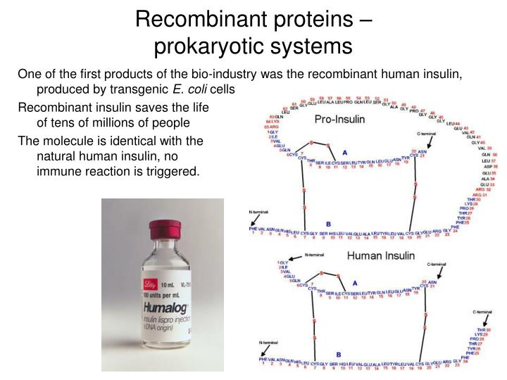 Recombinant proteins prokaryotic systems1