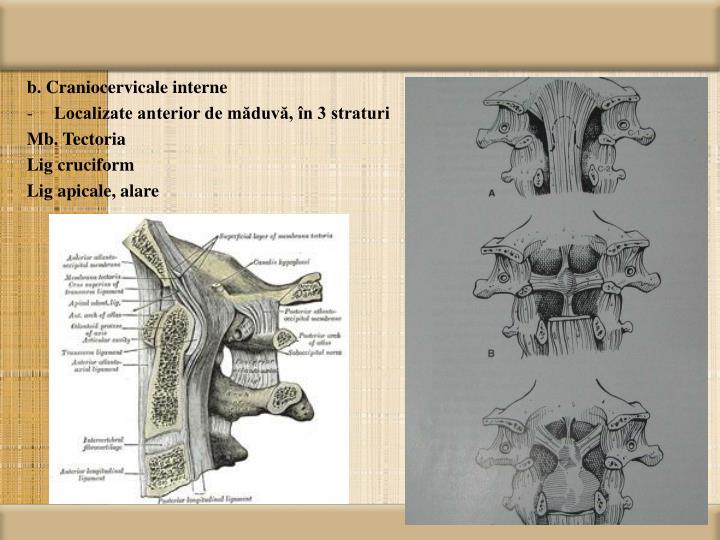 b. Craniocervicale interne