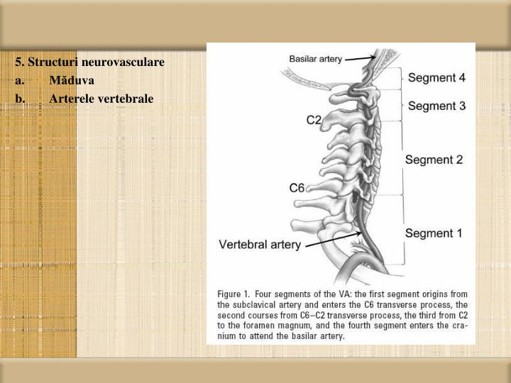 5. Structuri neurovasculare
