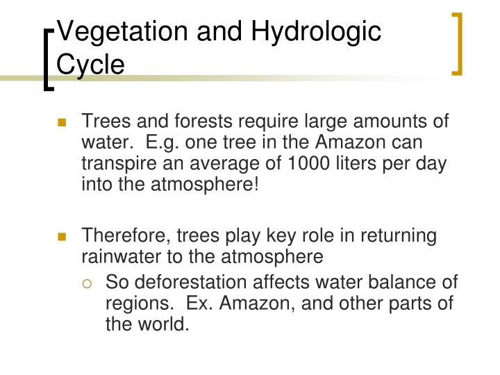 Vegetation and Hydrologic Cycle