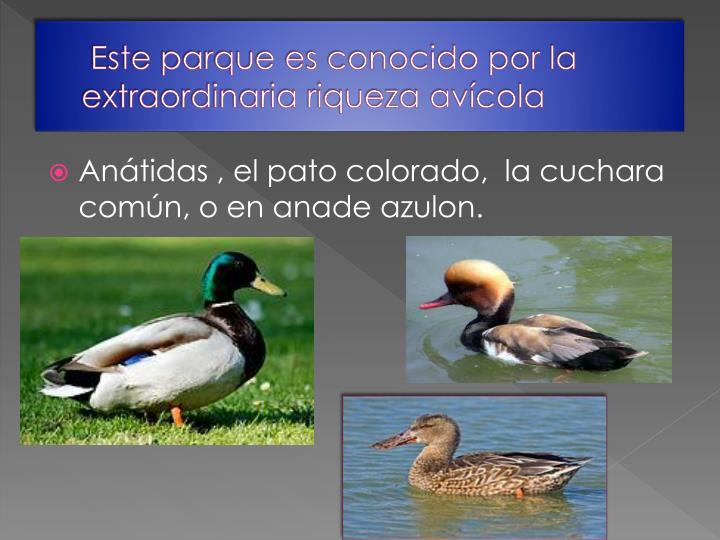 Este parque es conocido por la extraordinaria riqueza avícola