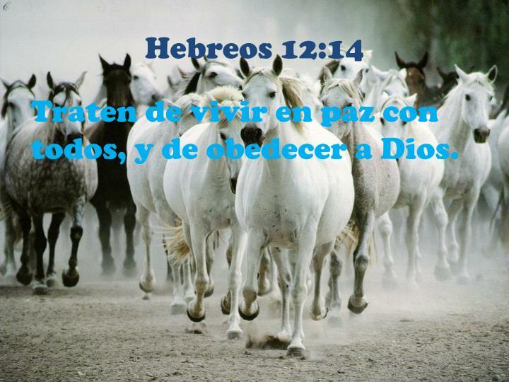 Hebreos 12:14