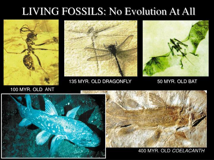 LIVING FOSSILS: No Evolution At All