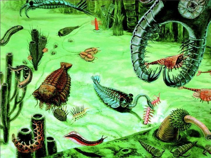 The Cambrian Explosion