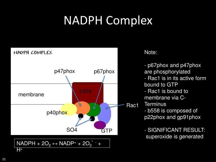 NADPH Complex