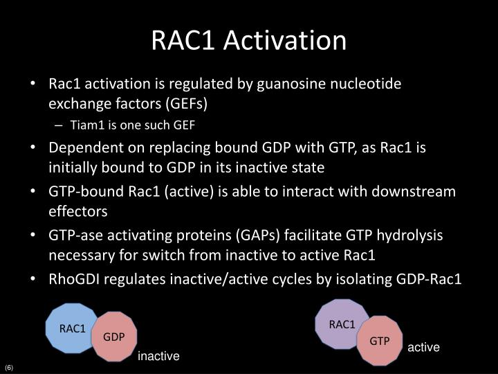 RAC1 Activation
