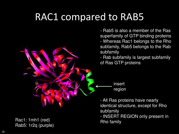 RAC1 compared to RAB5