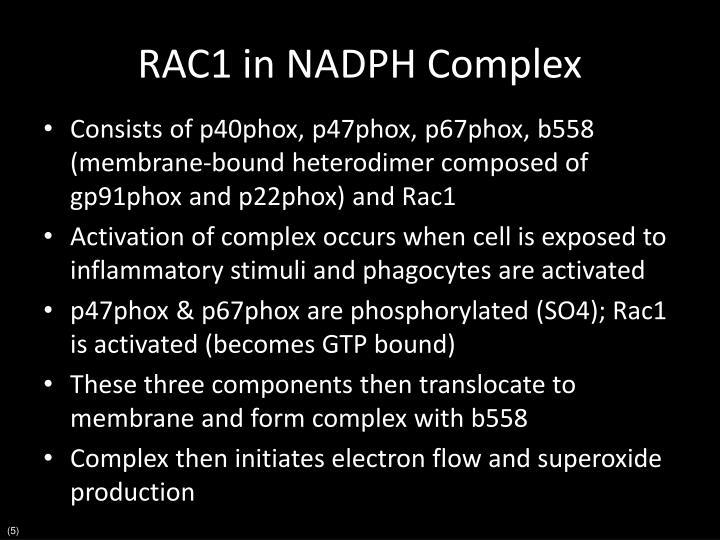 RAC1 in NADPH Complex