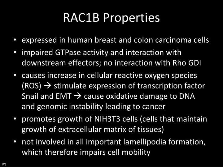 RAC1B Properties