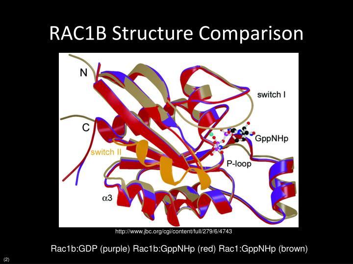 RAC1B Structure Comparison