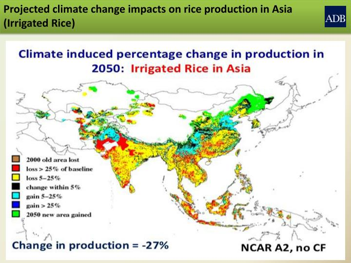 Projected climate change impacts on rice production in Asia (Irrigated Rice)