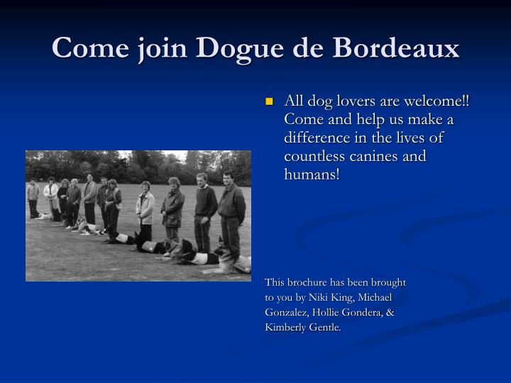 Come join Dogue de Bordeaux