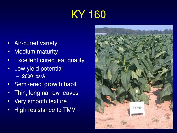 KY 160