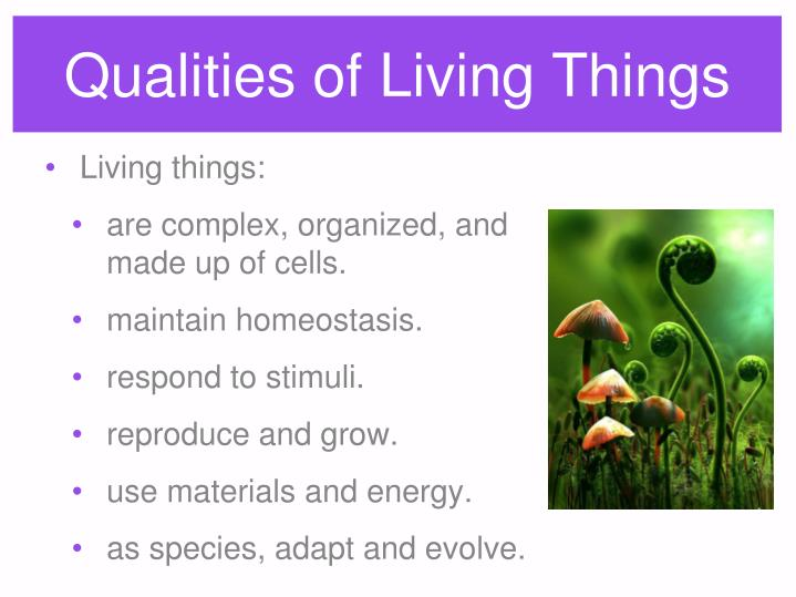 Qualities of Living Things