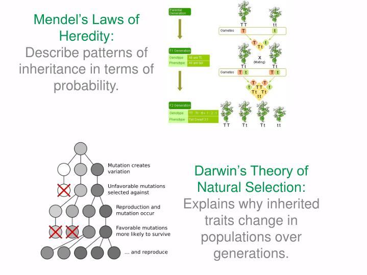 Mendel's Laws of Heredity: