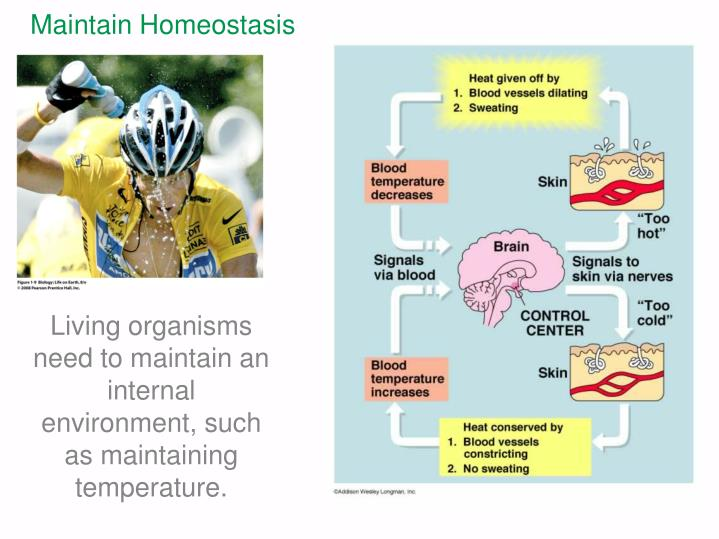 Maintain Homeostasis