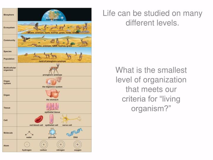 Life can be studied on many different levels.