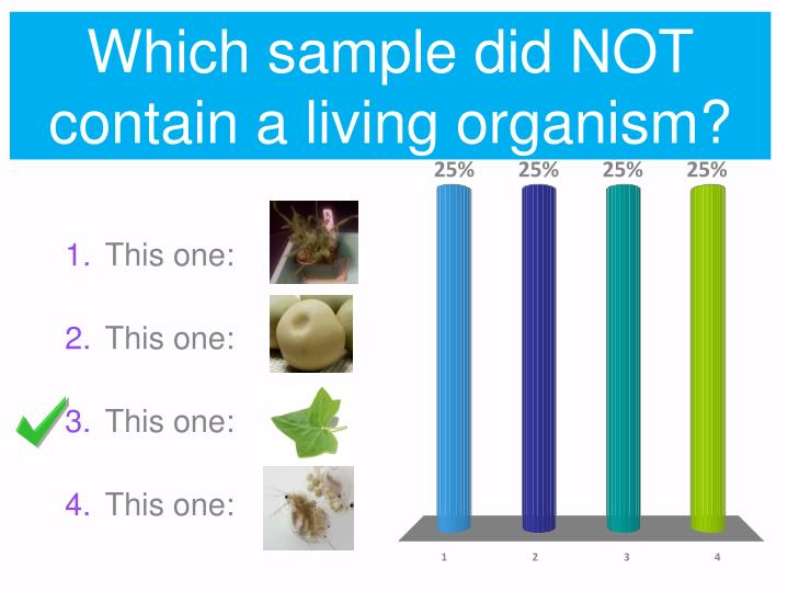 Which sample did NOT contain a living organism?