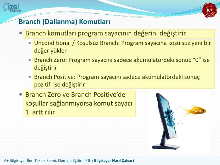 Branch (Dallanma) Komutları