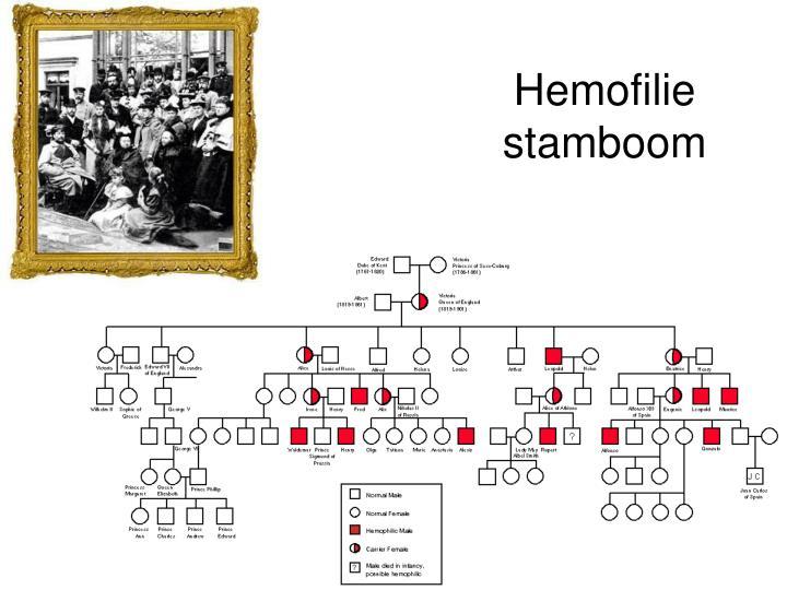 Hemofilie stamboom