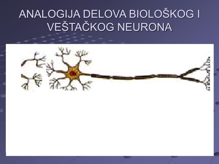 ANALOGIJA DELOVA BIOLOŠKOG I VEŠTAČKOG NEURONA