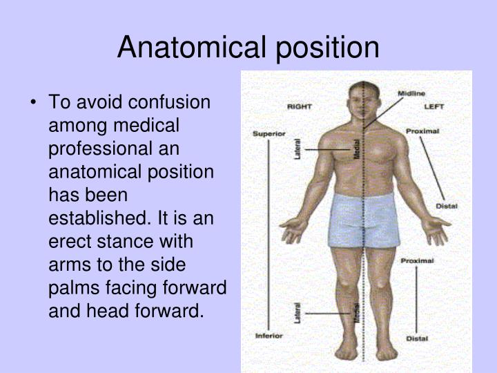 planes of anatomy quiz with Chapter 1 Introduction To Anatomy on API 20NOtes 20A 20Body 20Systems 20and 20Cavities furthermore Anatomical Terminology Worksheet as well Leg Joints Diagram moreover Introduction To Anatomy also 5.