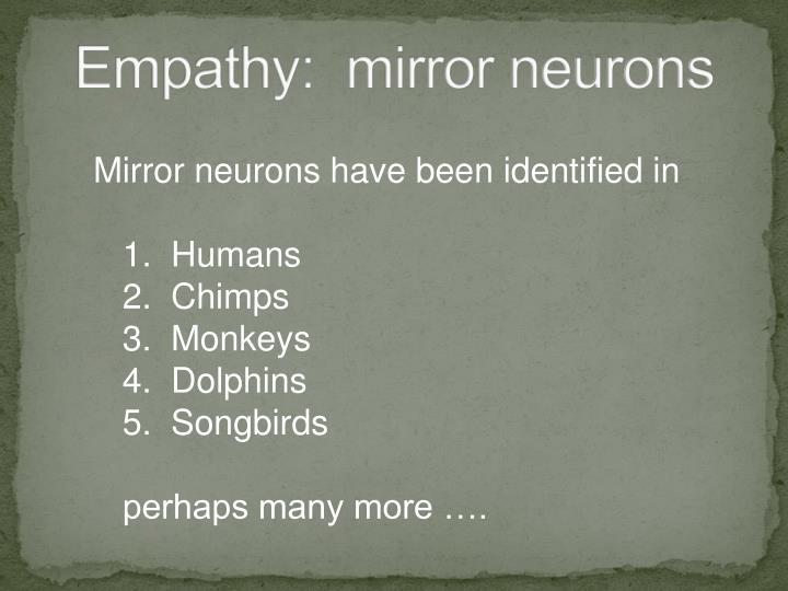 Empathy:  mirror neurons
