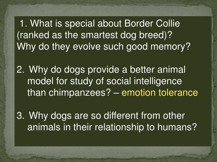 1. What is special about Border Collie (ranked as the smartest dog breed)?
