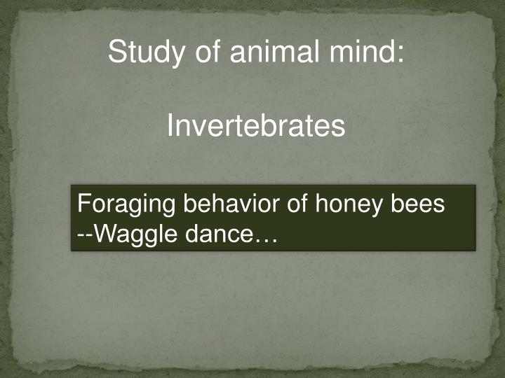 Study of animal mind: