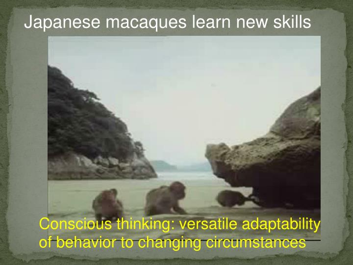 Japanese macaques learn new skills