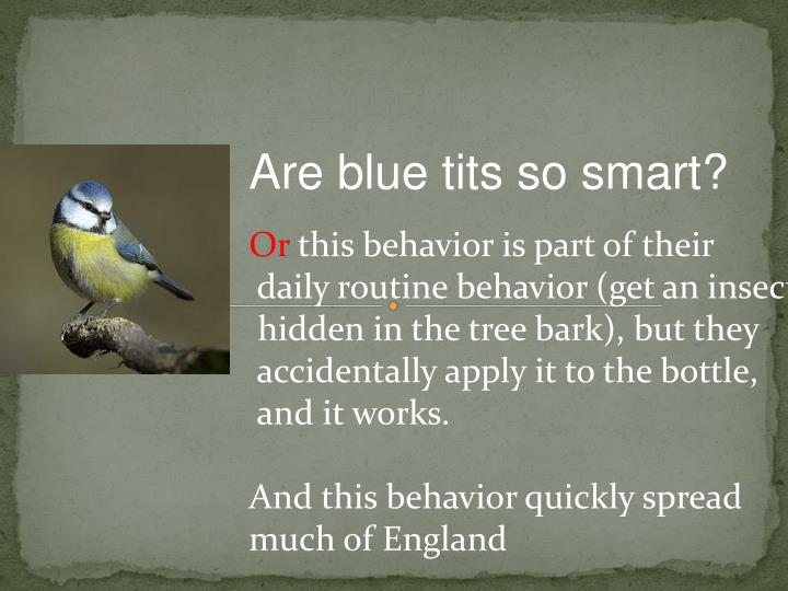 Are blue tits so smart?