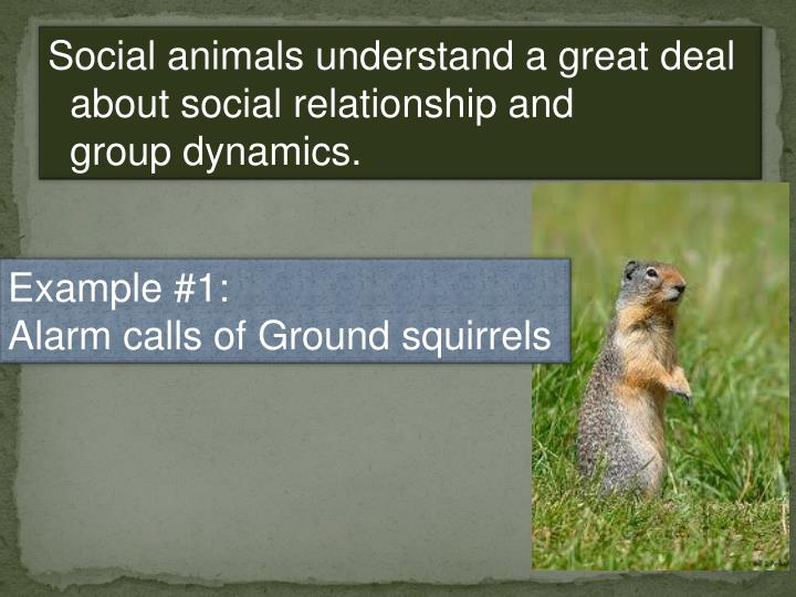 Social animals understand a great deal