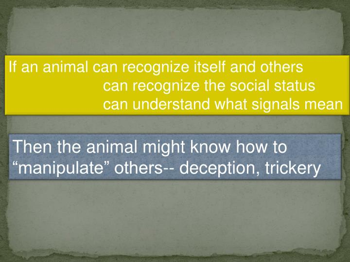 If an animal can recognize itself and others