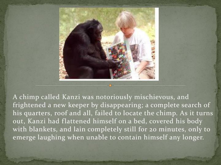 A chimp called