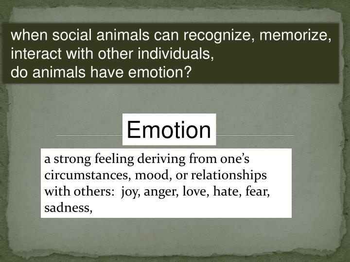 when social animals can recognize, memorize,