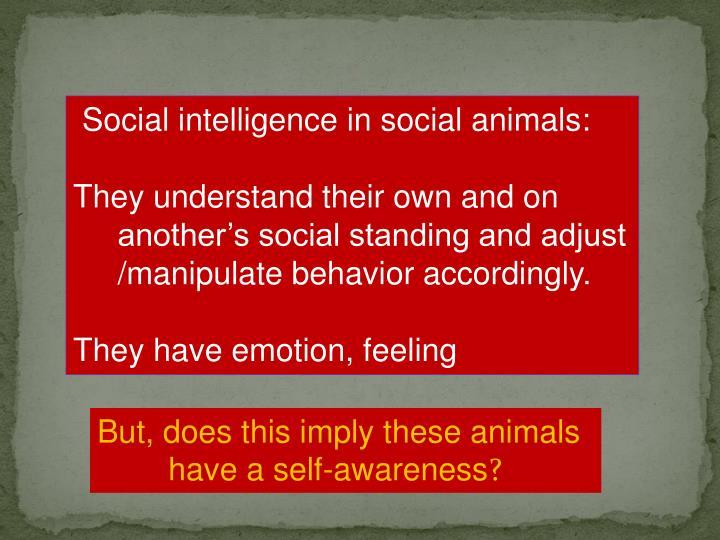 Social intelligence in social animals: