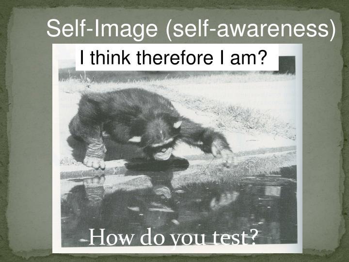 Self-Image (self-awareness)