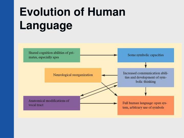 Evolution of Human Language
